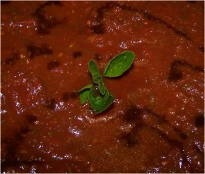 Tomato sauce for pizza